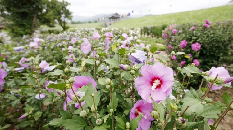(서산)0801+해미읍성+무궁화꽃(1)